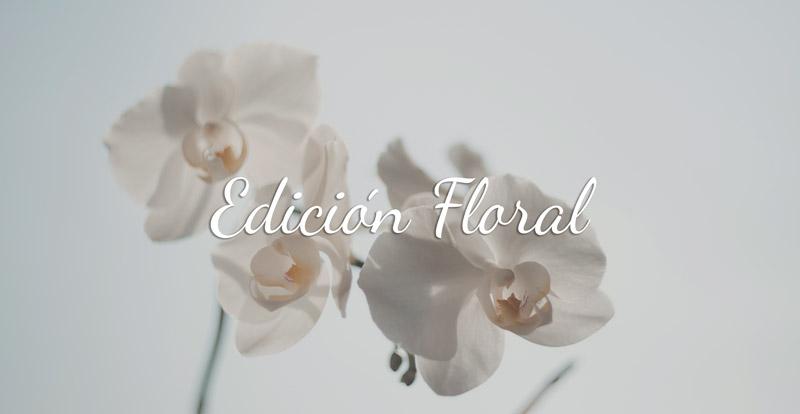 don-algodon-ambients-nueva-edicion-floral